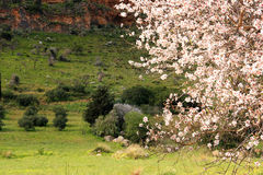 bloom spring στοκ εικόνα με δικαίωμα ελεύθερης χρήσης