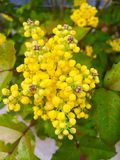 Bloom 2. Spring flowering plant Stock Photography