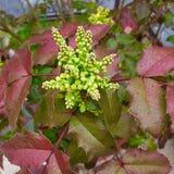 Bloom. Spring flowering plant Stock Photo