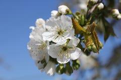 In bloom Stock Image