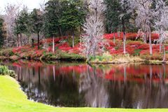 Garden Reflections South Carolina SC Plantation. Landscape of blooming azaleas that turn a hillside into a blaze of vibrant red colors that create an aura of Royalty Free Stock Photo