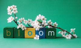 Bloom word with plum blossoms Stock Photos