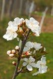 bloom z drzewa fotografia stock