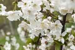 bloom z drzewa zdjęcia royalty free