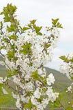 bloom z drzewa obraz stock