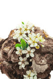 Bloomed dry stump Royalty Free Stock Photography