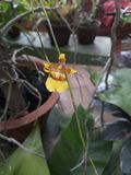 Bloomed Small Orchid Closeup look stock photography