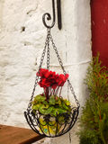 Bloomig Flower, Exterior House Decoration Stock Photos