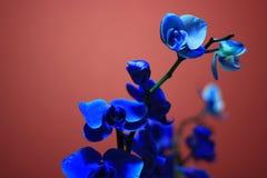 Bloomin-Blau lizenzfreie stockfotos