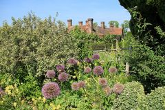 Blooming Allium in Great Dixter House & Gardens. stock images