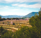 Blooming almond trees. Spain Stock Photography
