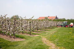 Blooming apple orchard and farm house Stock Photos