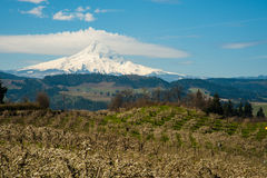 Blooming apple orchards in the Hood River Valley, Oregon Royalty Free Stock Images