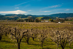 Blooming apple orchards in the Hood River Valley, Oregon Stock Photo