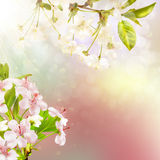 Blooming apple tree against the sky. EPS 10 Stock Photography