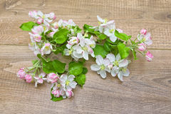 Blooming apple tree branch on wooden background Stock Image