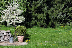 Blooming apple tree in the garden Stock Photo