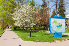 Blooming apple tree and the map in Catherine Park Royalty Free Stock Photography