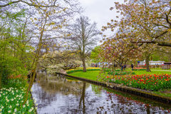 A blooming apple tree near the river in Keukenhof park, Lisse, Holland, Netherlands royalty free stock photo