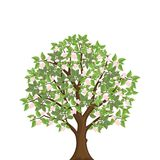 Blooming apple tree. Spring tree with pink flowers. Isolated vector illustration Stock Image