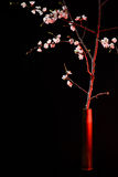 Blooming apricot in the artillery shell Stock Images