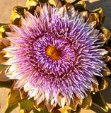 Blooming artichoke Stock Photo