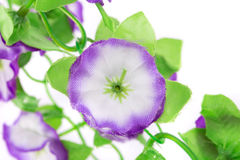 Blooming artificial flowers Stock Image