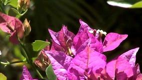 Blooming Australian Plant stock video footage