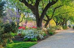 Blooming Azaleas Washington DC Stock Photo