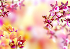Blooming background Stock Image
