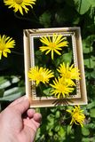 Blooming beautiful flowers in wooden frame royalty free stock photo