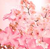 blooming beautiful japanesse flower orchid Stock Photo