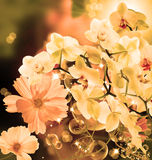 Blooming beautiful japanesse flower orchid Stock Images