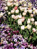 Blooming bed of flowers Royalty Free Stock Photography