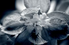 Blooming Black and White Stock Photography