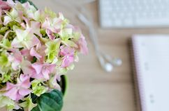 Blooming, Blur, Bouquet Stock Images