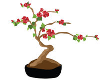Blooming Bonsai Tree Royalty Free Stock Image