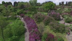 Blooming botanical garden with lilac, green trees, bushes, fields of tulips. Blooming botanical garden with lilac, green trees, bushes and fields of tulips stock video