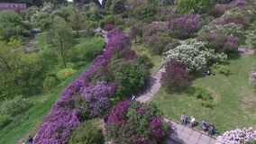 Blooming botanical garden with lilac, green trees, bushes and fields of tulips. Blooming botanical garden with lilac, green trees, bushes and fields  tulips stock video footage