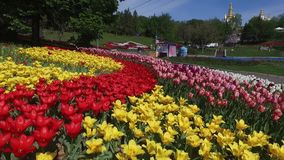 Blooming botanical garden with lilac, green trees, bushes and fields of tulips. Botanical garden with lilac, green trees, bushes and fields of tulips stock footage