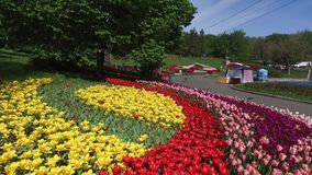 Blooming botanical garden with lilac, green trees, bushes and fields of a tulips. Blooming botanical garden with lilac, green trees, bushes and fields of tulips stock video