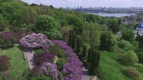 Blooming botanical garden with lilac, green trees, bushes and fields of tulips stock video footage