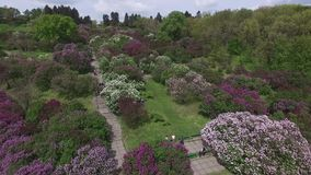 Blooming botanical garden with lilac, green trees, bushes and fields of tulips stock footage