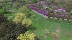 Blooming botanical garden with lilac, green trees, bushes and fields of tulips stock video
