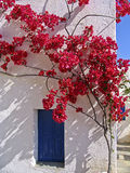 Blooming bougainvillea. Framing the window in a Greek island stock photo