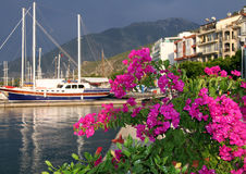 Blooming bougainvillea on the background of Fethiye bay, Turkey Stock Photography