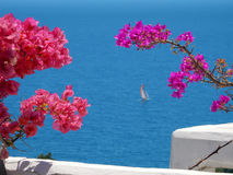 Blooming bougainvilleas against the sea Royalty Free Stock Images
