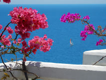 Blooming bougainvilleas against the sea Royalty Free Stock Image