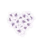 Blooming bouquet sakura blue flowers in shape heart Stock Photos