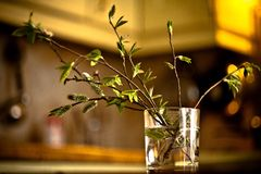 blooming branch in a glass Stock Images